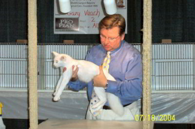 cat show judge with white cat