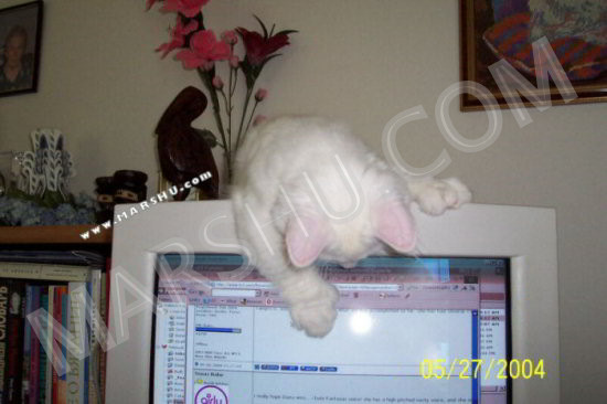 cat playing with computer screen