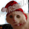 cat in red santa hat